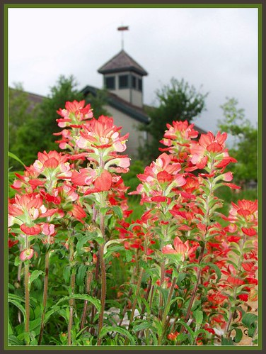 lady bird johnson wildflower center by TexasValerie