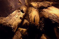 Logs (Tony Danza) Tags: fish ocean underwater acquarium