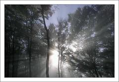 Herbststrahlen (agu2000_de) Tags: google nebel sonnenstrahlen herbststrahlen