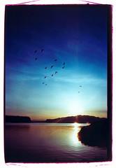 Westerly Flow (Bhlubarber) Tags: ocean sunset reflection bird film island xprocess bc pacific flight provia strait sunshinecoast davidniddrie