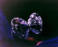 Butterfly satori
