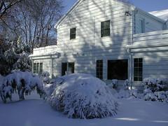 Manhasset in winter! (Nick the New York Kiwi) Tags: snow backyard peale manhasset
