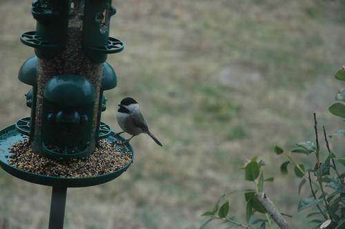 Birdie Breakfast