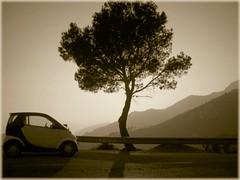 El nico (kenwood) Tags: tree smart car sepia arbol lafotodelasemana desert gimp ruinas coche desierto monasterio oropesa castellon palmas carmelitas palmes benicasim desertdelespalmes desiertodelaspalmas lfsimagenesoniricas lfscontraluces