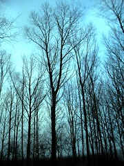 More trees (Harry Mijland) Tags: trees moon holland tree netherlands dutch bomen nederland thenetherlands boom vechten dearharry houtensevlakte nieuwwulven harrymijland