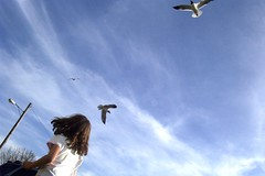 one should NOT feed the gulls