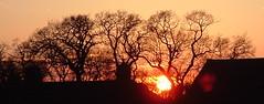 Winter Sunset (rosberond) Tags: winter sunset sky topv111 wow norfolk