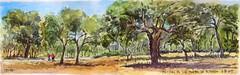 Encinas en los Montes de El Pardo (P.Barahona) Tags: árboles pluma monte acuarelas corredores