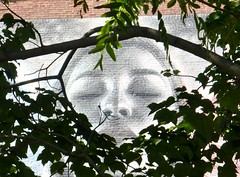 Through tree (Lorianne DiSabato) Tags: streetart college boston campus ma mural nu massachusetts northeastern elmac northeasternuniveristy