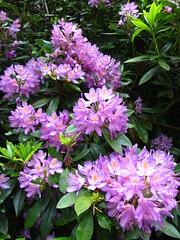 Purply flowers (zoekay) Tags: park flowers trees nature birmingham purple suttoncoldfield suttonpark outsidespaces