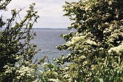 (lenkadrbalova) Tags: sea nature landscape island 50mm nikon sweden d3100