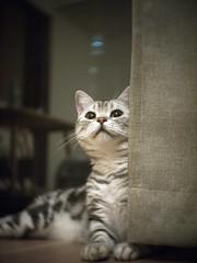 うなこ (mijabi) Tags: london cat ross kitty olympus 猫 19 ねこ 25mm ep1 ぬこ ロンドン 1inch オリンパス ロス cmount うなこ unaco