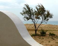 Scorcio mediterraneo (La minina) Tags: sea italy beach mediterranean italia mare sicily bianco spiaggia sicilia vento cornice macchiamediterranea pozzallo