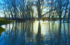 Río Ebro desbordado, Zaragoza. (eustoquio.molina) Tags: río flood zaragoza ebro inundación