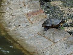 Tortuga (Jusotil_1943) Tags: 18052013 tortuga