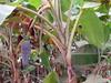 Plants (Ali_Haikugirl) Tags: tonlésap cambodia travel