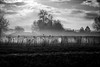 Le reveil des serres / The awakening of the hothouses (vedebe) Tags: noiretblanc netb nb bw monochrome paysages lumière brume brouillard serres