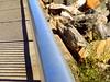 Borderline of the Civilizations (dimaruss34) Tags: newyork brooklyn dmitriyfomenko image manhattanbeach fence rocks cat