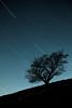 Ñegoade IV (joseba71) Tags: arbol tree estrellas stars startrail largaexposicion longexposure landscape paisaje naturaleza noche night nightscape nightsky opakua parquenatural paisvasco euskadi españa entzia alava araba xpro1 xf50140 contraste contrast ñegoade