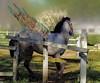 CONTRADICCIONES DE LA VIDA, PEGASO ENCERRADO. (FOTOS PARA PASAR EL RATO) Tags: rancho alas ranchoavandaroméxico pegaso caballos