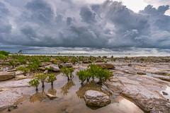 Storm at Nightcliff (NettyA) Tags: 2016 australia darwin nt nightcliff northernterritory sonya6000 clouds coastal mangroves rockplatform rocks storm thunderstorm wetseason sunsetpark