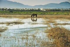 Temporada baja (nemenfoto) Tags: pla santjordi reflejo reflections caballo horse humedal aeropuerto aeroport mallorca nemenfoto temporadabaja
