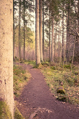 Dunkeld Hermitage 2017-05774 (garypatersondesign) Tags: dunkeld perthshire perth scotland forest trees