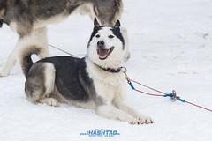 dogsled2017-35