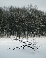 winter forest (videodigit16) Tags: ukraine nature image outdoor landscape serene trees winter ice snow forest cold silence calm clouds village recreation tree plant snowbank