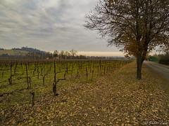 Vendina-1 (gaddi_luca) Tags: vignetodinverno vendina profondita prospettiva winter collinereggiane flickrsbest