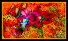 poppies painted framed (Sonja Parfitt) Tags: pink flowers blue orange color photomanipulated