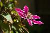 Later (David S Wilson) Tags: uk flowers england flower ely fens 2015 davidswilson leicadgsummilux25mmf14asph lumixdmcgm5 panasonic35100mm1456asph mzuiko17mm118 adobelightroom6