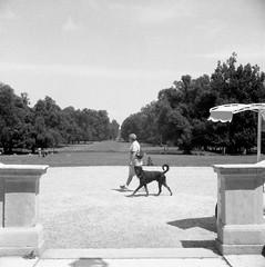 Villa Reale, Monza 7#9 (magioca65) Tags: italy 6x6 voigtlander bakelite 1939 400iso monza skopar f35 brillant rpx ruleof16