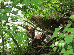 IMG_1083 (mohandep) Tags: flowers plants nature us wildlife families stlouis cities visit milwaukee