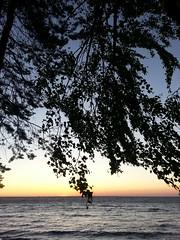 Sunset. Финский залив. (presteza777) Tags: финскийзалив море закат russia thegulfoffinland sea trees sunset puestadelsol coucherdusoleil sky