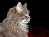 IMGP7089 (d_fust) Tags: cat kitten gato katze 猫 macska gatto fust kedi 貓 anak katt gatito kissa kätzchen gattino kucing 小貓 고양이 katje кот γάτα γατάκι แมว yavrusu 仔猫 का skorpi बिल्ली बच्चा