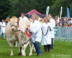 194th Banchory Show Grand Parade 3 (Rick Ellerman) Tags: people field animals cow aberdeenshire cows finepix fujifilm agriculture bovine winners agricultural banchory grandparade hs30exr 194thbanchoryshow 194thbanchoryshowgrandparade