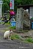 瀬戸の島猫 (GINPA 銀波) Tags: cat sony ho ねこ 瀬戸内海 α 島猫 地域猫 瀬戸の島猫