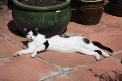 Cat enjoying the sun (Moldovia) Tags: blackandwhite pet animal cat blackwhite feline catalog laying catpix bridgecamera catspotting catmoments catnipaddicts catsunleashed fujifilmfinepixhs50exr