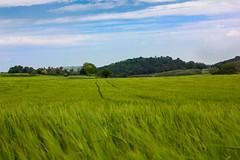 _MG_0148 (Lost-Travelers) Tags: emporda baix girona catalunya paisatge paisaje