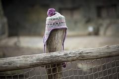 Die vergessende Mütze (DeanB Photography) Tags: mütze muetze zoo gelsenkirchen stamm baum gehege kind bommel