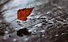 Das Blatt fliegt, um den nassen Holztisch anzuzünden. Was sonst? (Manuela Salzinger) Tags: winter abend evening sonnenuntergang sunset wald forest waldholztisch woodenforesttable tisch table holz wood sprühflasche aerosolcan regen rain blumen flowers verwelkt withered