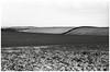 Oxfordshire Landscape, 13 January 2017. (Flat Twin) Tags: oxfordshirelandscape oxfordshire tmy2400 leicam6 leicaelmarm50mmf28 snow winter winterscene perceptol1211mins monochrome blackandwhite blackwhite ilfordperceptol perceptol ilford tmax kodaktmax