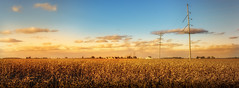barry road savana (Christian Collins) Tags: stlouismichigan michigan cornfield corn field sunset utility pole atardecer tarde campo countryside pastoral canon t2i efs24mm farm orange yellow evening flatland gratiot savanalike powerline