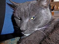 1360-21L (Lozarithm) Tags: smokey cats pets lumnix tz60 macro