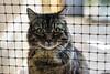 Panda Squares (Light Echoes) Tags: sony a6000 2016 winter forgottenfelinesandfidos cat chat kot gatto feline pet katze kat kalo ðºð¾ñðºð° gato gate gat animal ê³ ìì´ î³î¬ïî± koäka è² ø§ùùø· kass kissa ×ת×× à¤¬à¤¿à¤²à¥à¤²à¥ miv macska kucing ç« vighro kaä·is katä qattus katten ú¯ø±ø¨ù pisica maäka katt à¹à¸¡à¸§ kedi ðºññðºð° ø¨ùû mã¨o cath rescue domesticlonghair maincoon panda