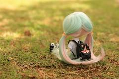 New girl :) (n a m i [ 波 ]) Tags: dal doll dalphoebe pullipdoll daldoll bluehair minthair sunnyday kawaii cute littlegirl