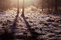 frosty winter clearing (Christian Collins) Tags: snow frosty winter morning swamp wetlands frozen cold chilly vegetation trees shadows sunrise amanecer enero january canon eos 5d mark iv cityforest
