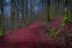 (Israel LIáñez Domínguez) Tags: nikond7100 nikon naturaleza landscape dreamscape trees outdoor d7100 nature nomad forest bosque