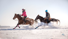 Snow Ride (Andreas Krappweis - thanks for 2,4 million views!) Tags: horse riding winter snow fun quarterhorse ride speed canon1dx canonef70200mm128l